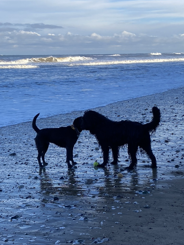 beach friends dogs