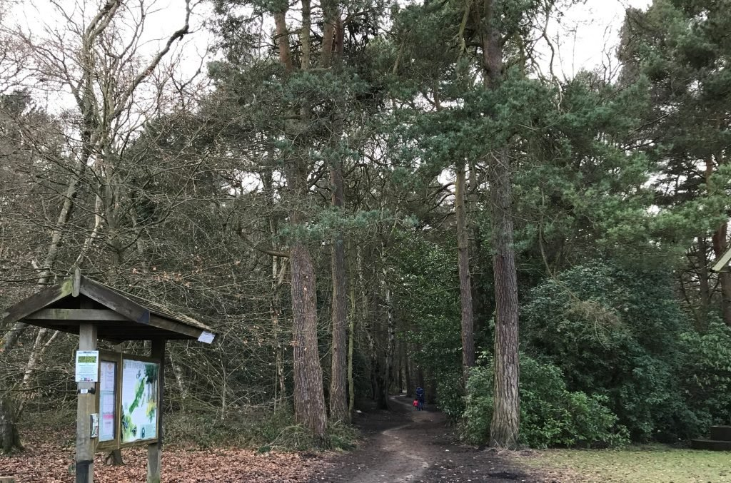 path leading into pine woods information board