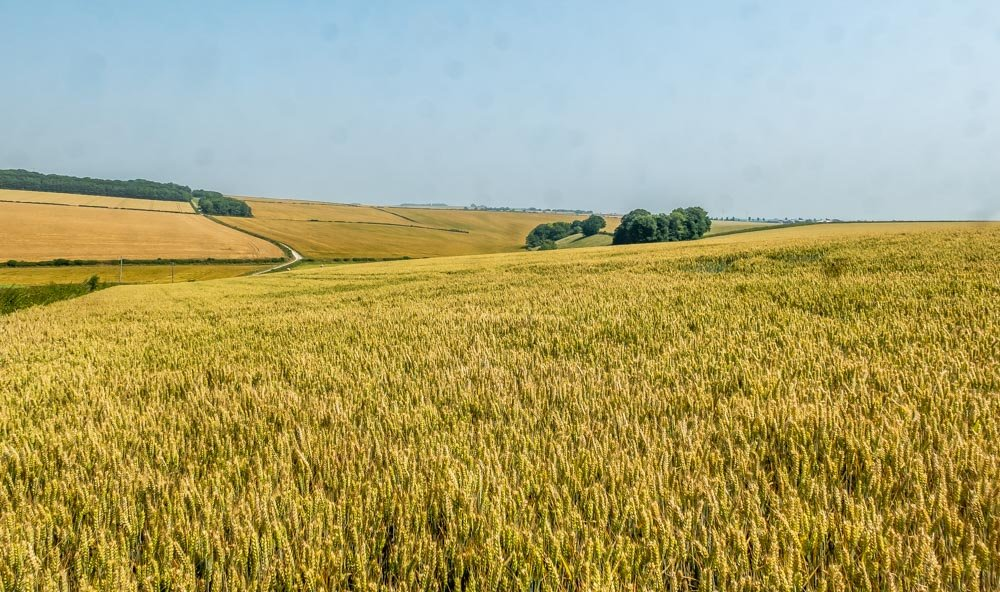 crops wolds