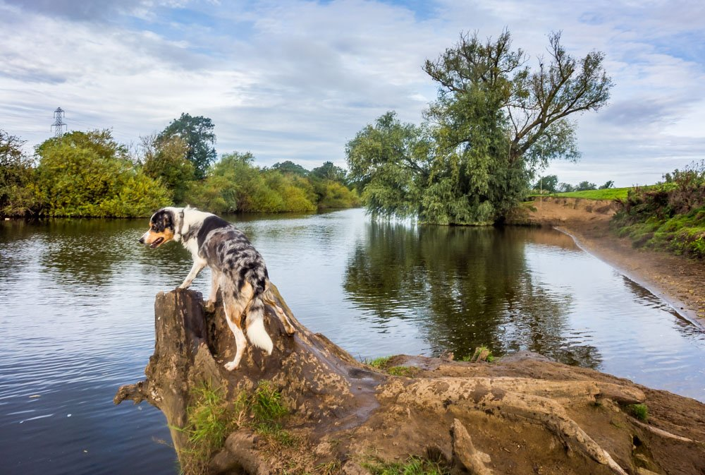 river ouse and dog