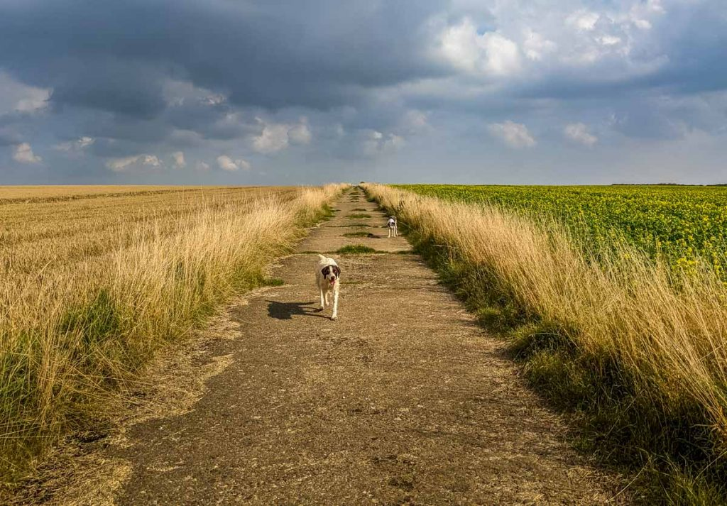 yorkshire wolds walk