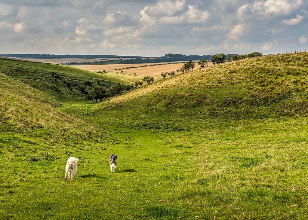 yorkshire wolds scene